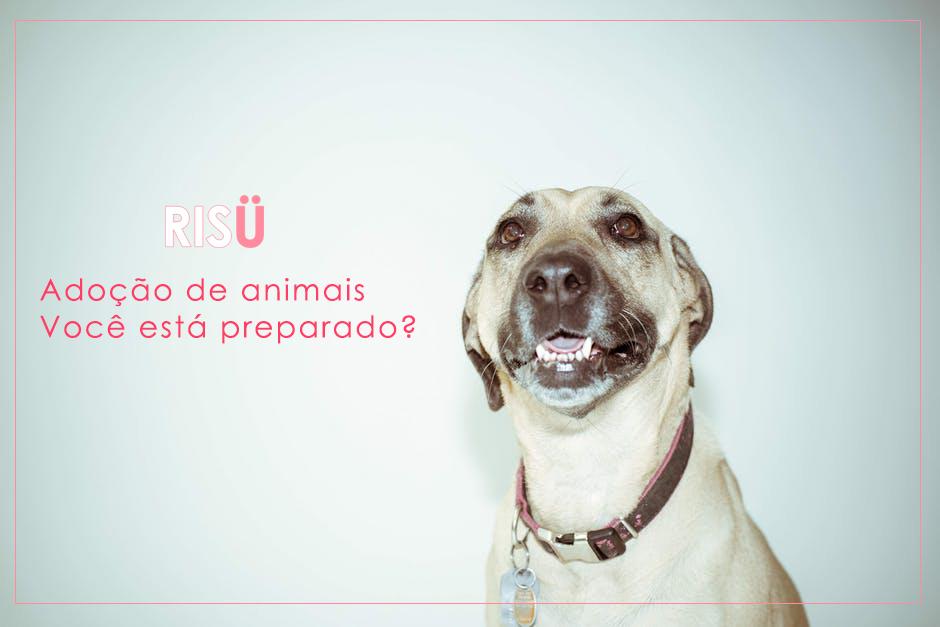 Adoção de Cachorro | Você está preparado?
