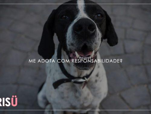 Adotar Cachorro | Adote com responsabilidade