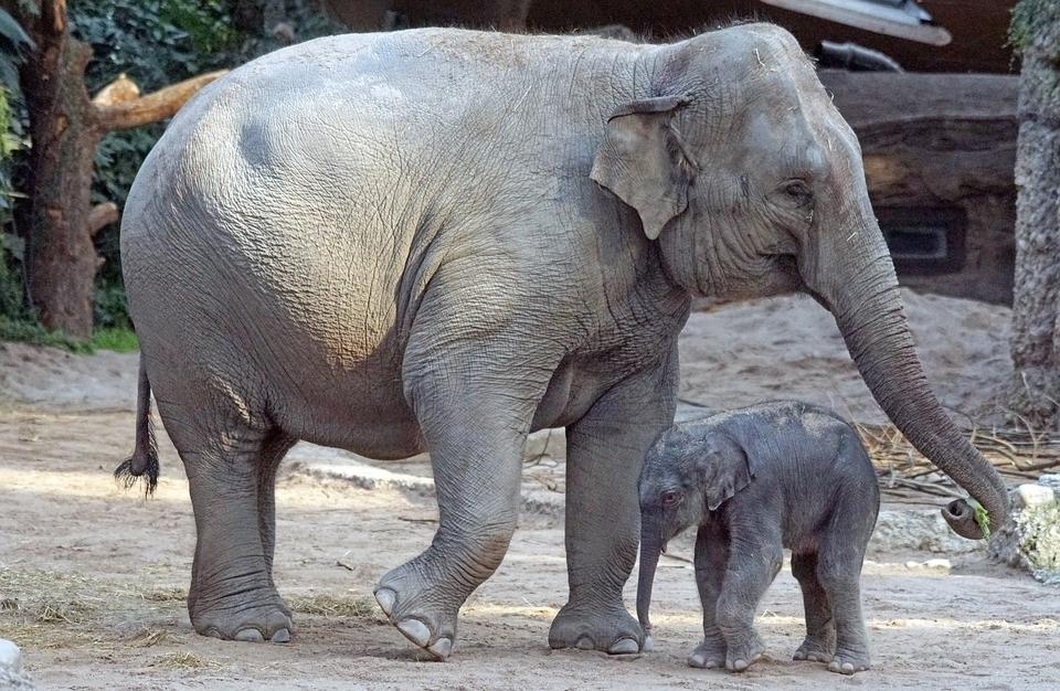 animais-em-extinção